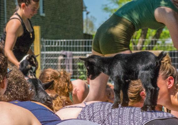 Carousel goat yoga dabble chicago