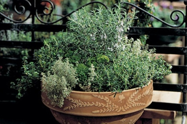 Carousel herbal desktop garden urban sprouts dabble seattle