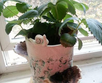 Medium dabble snail fossil texture flowerpot by kim