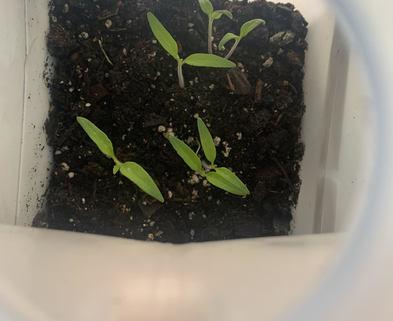 Medium winter sowing 1