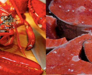Medium salmon lobster