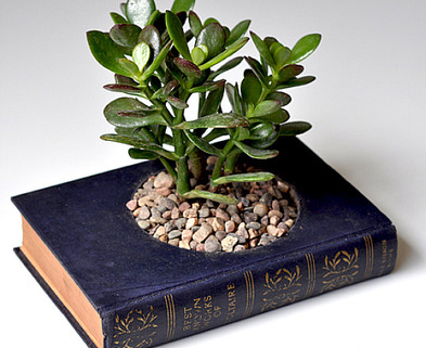 Medium bookterrarium