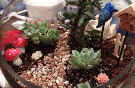 Medium fairy garden terrarium