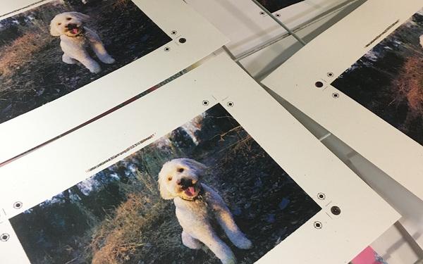 Carousel 2019 03 01 screenprinting halftones 2