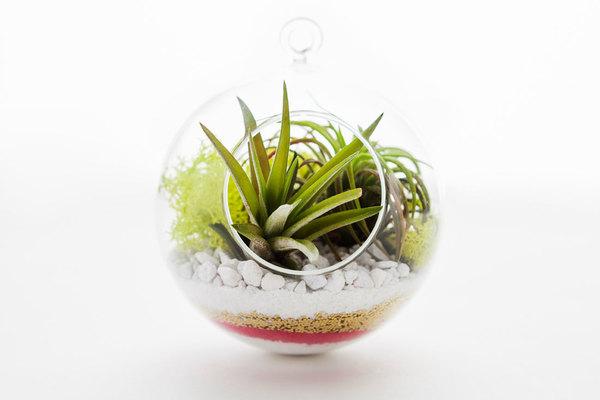 Carousel terrarium dabble denver