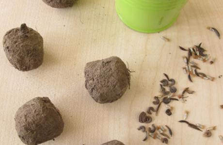 Medium seed bomb