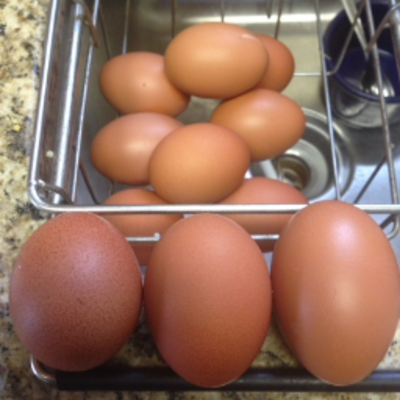 Carousel eggs