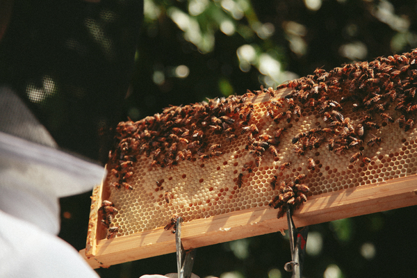 Beekeeping Classes San Francisco   Beginner Beekeeping Class | Dabble