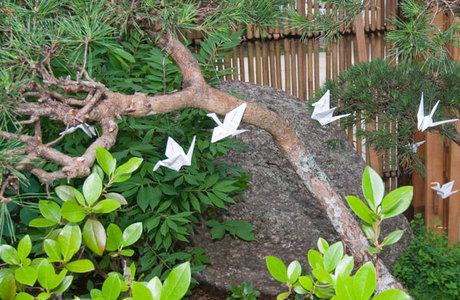 Medium 6 cranes 5640a