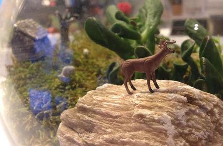 Medium deer in the wilderness