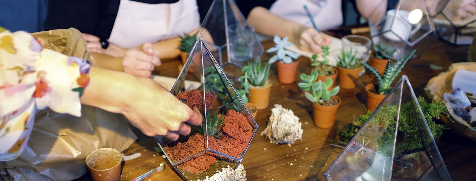 Carousel terrarium slider