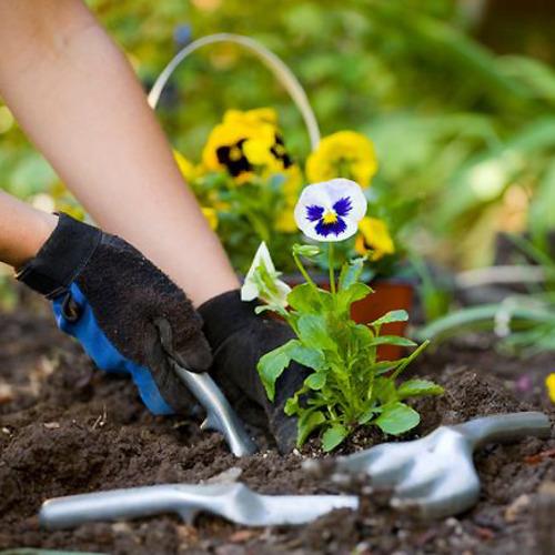 Medium gardening 2